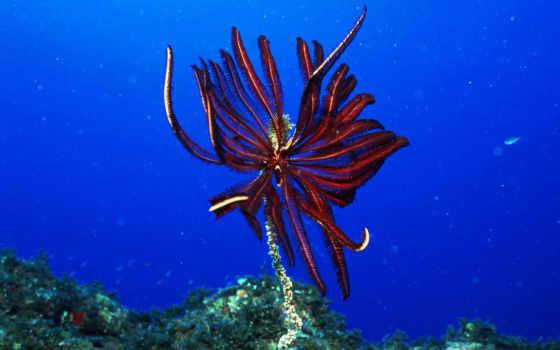 underwater, world