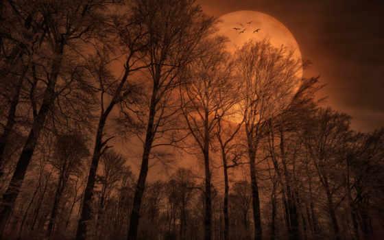 луна, лес