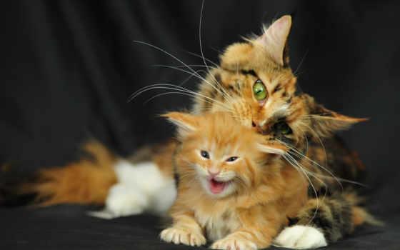 кот, мама, cats, котенок, baby, kittens, animals, funny,