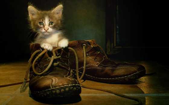 котенок, ботинке, сидит, кот, кошки, zhivotnye, котята, ботинки, орешки, striped,