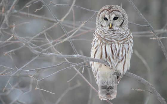 птицы, сова, winter