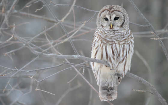 птицы, сова, winter, птица, zhivotnye, грусть, loneliness, совы, бабочки,