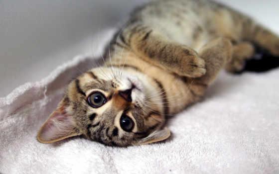 свет, кот, лежит, котенок, разных, полосатая, спине, округлив,
