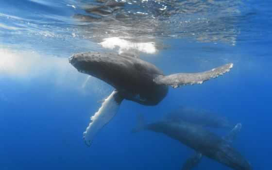 киты, касатки, depth, ocean, кит,
