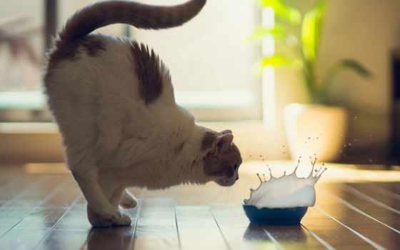 video, прикольные, коты, смешные, котов, хорошем, приколы,