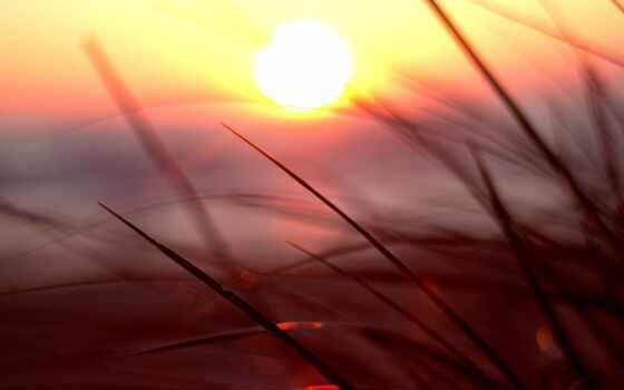 природа, закат, sun, красивый, макро, трава
