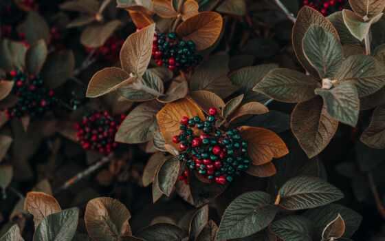 color, осень, палитра, схема, colour, wed, пасть, pretty, питомник