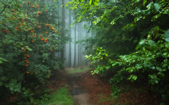 landscape, natural, дерево
