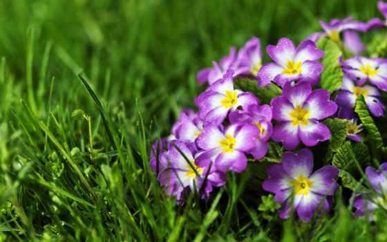 цветы, flowers, nen
