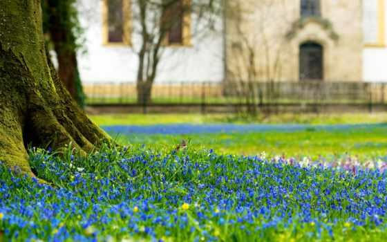 cvety, замoк, castle, дерево, поляна, просмотр, ствол, scilla, flowers,