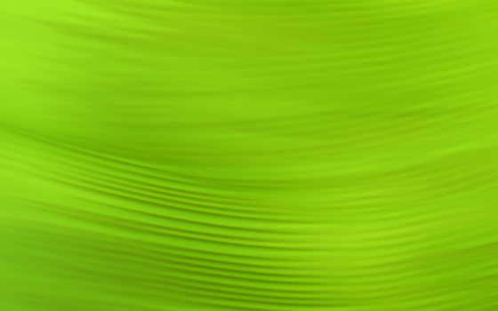 leaf,