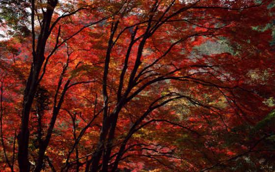 осень, глубокая, red, trees, яркие, осенние, краски, осени, woods,