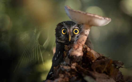 сова, коллекция, красивый, птица, animal, интересно, art, вечер, природа, funny