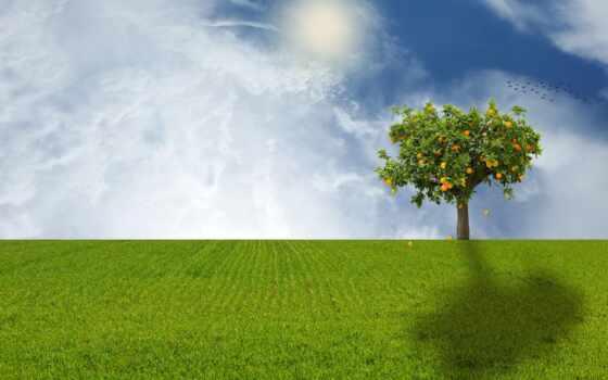 much, дерево, allaah