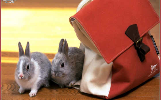 rabbit, salvează
