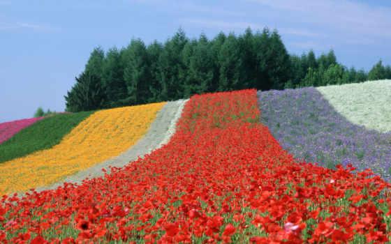поля, japanese, nature, resmi, japan, flowers, катерина, xl, japonesenlinea,