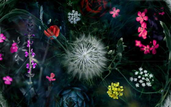 kwiaty, mniszek, grafika