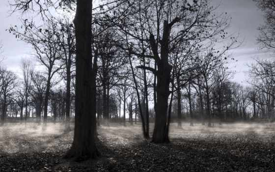 осень, instagram, лес, trees, фото, js, прикол, images, листва, top, гудвин,
