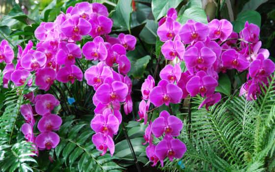 орхидеи, цветы, картинка