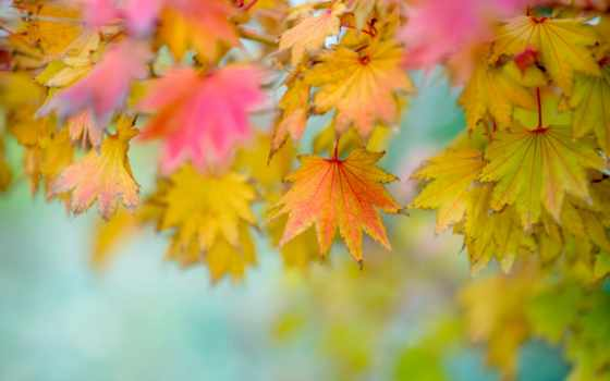листва, осень, осенние, размытость, природа, фотофон,