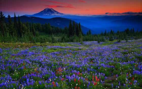 slunce, hory, západ, альпы, закат, louky, пейзажи -, луга, люпины,