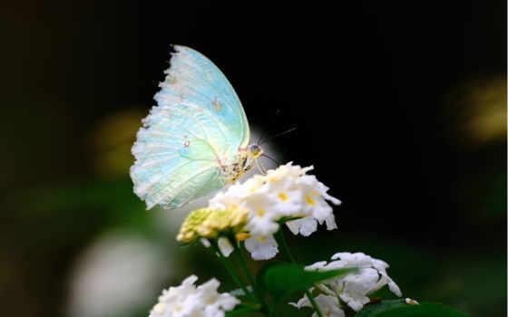 imágenes, mundo, mariposas, amor, крылья, белые, frases, цветы, hadas, бабочка,