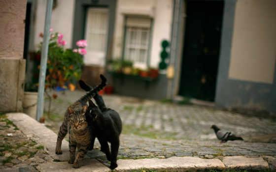 кот, меломан, голубь, pack, web,