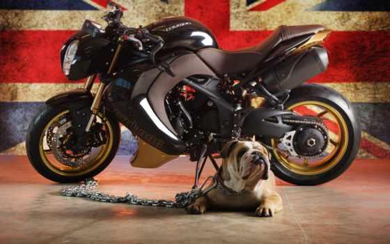мотоцикл, бульдог, triumph