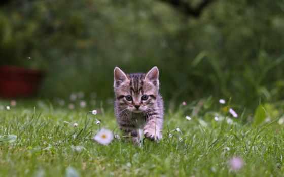 именем, вконтакте, хорошем, котенок, пользователей, взгляд, войдите, найти, дотянуться, мостовик, морда,