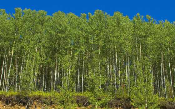пейзажи -, сибири, лес
