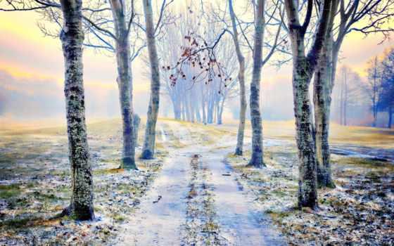 camino, nieve, fondos, rboles, pantalla, hierba, hojas, del,
