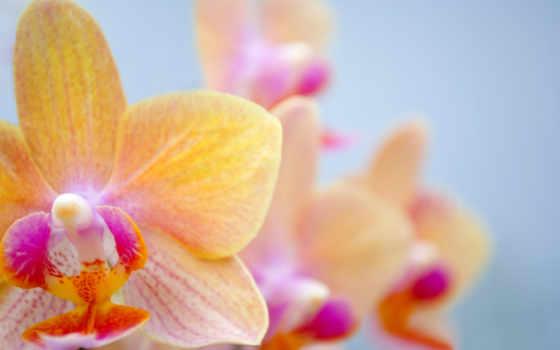 ecran, orchidee, fonds, fond, télécharger, bureau, fleur, papillon, оранжевый, fleurs,