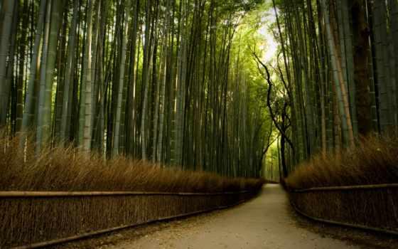 best, бамбук, лес
