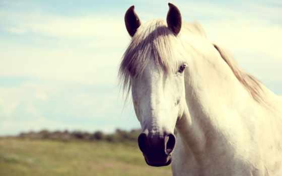 duvar, белая, лошадь