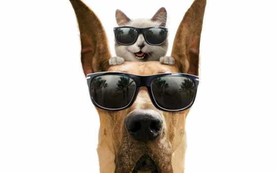 собака, кот, очки, кошки, marmaduke, sunglasses, семейная, клиника, собак,