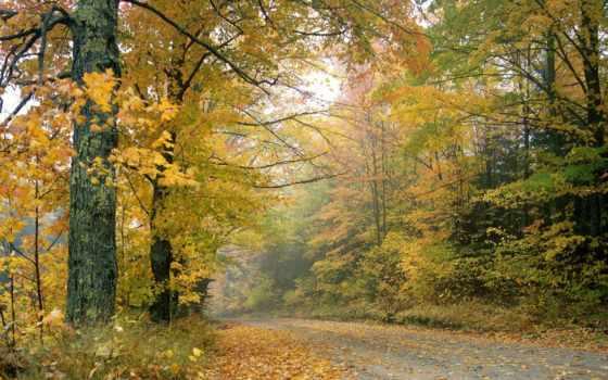 осень, природа, nikii