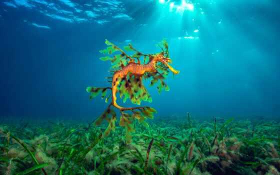 underwater, world, winner, море, фотограф, hippocampus, much, card, fish, год, diva