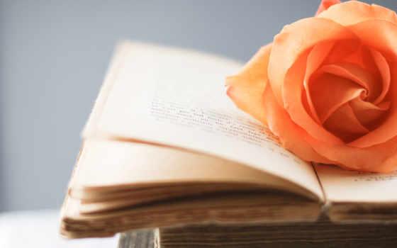 роза на открытой книге