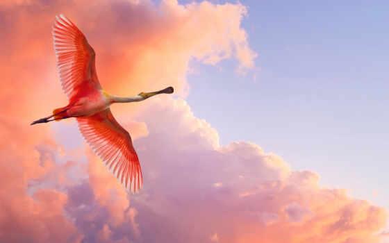 птица, oblaka, небо, крылья, полет, закат, вечер, летит, клюв,