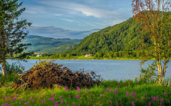 tapety, northern, норвегия, mountains, река, ворс, заводь, тихая, ветви,