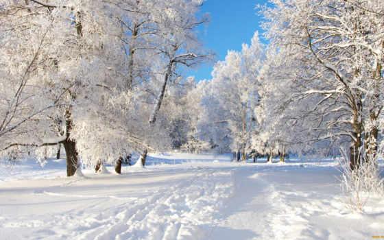winter, снег, trees, природа, лес, trail, страница,