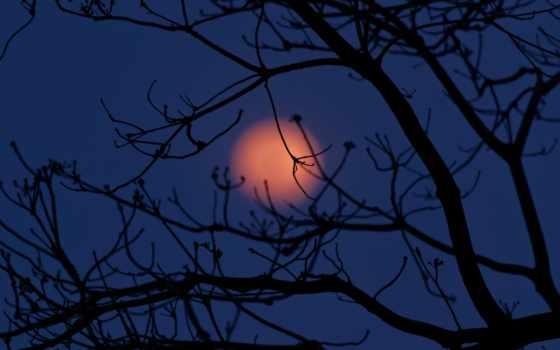 дерево, ветви, ветки, ночь, луна, которых, есть, тег,
