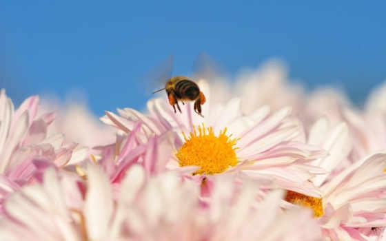 animals, insects, природа, страница, пчелы, color,