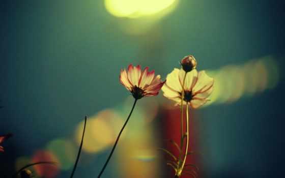 cvety, макро, природа, растения, картинка, обработка, color, экран,