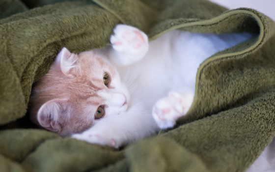 кот, сладкое, кошки, cats, free,