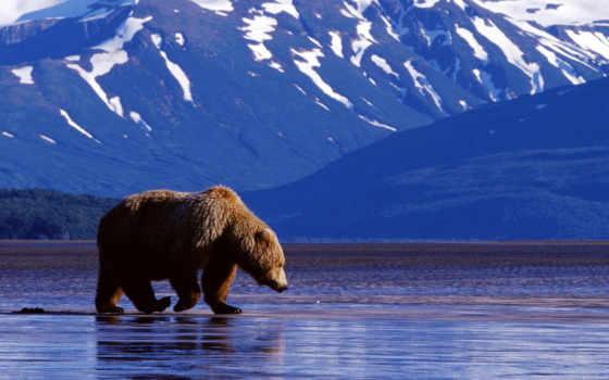 горы, вода, медведь