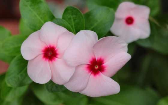 Цветы 20034