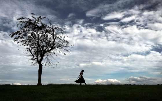 небо, дерево