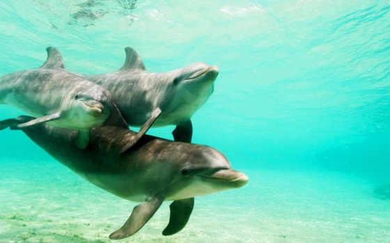 дельфины, дельфин, за