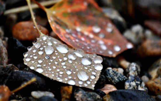 макро, листья, water